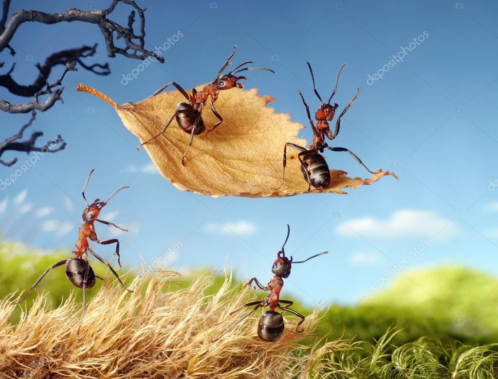 ants flying on leaf, ant tales