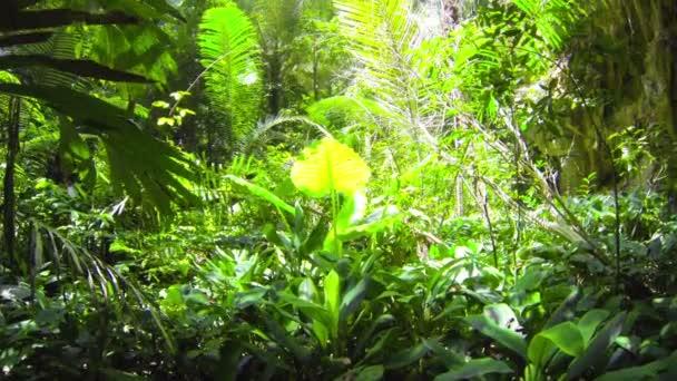 1920 x 1080 video - jungle zelený tropický deštný prales
