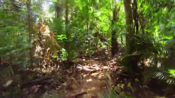 Schnelles Laufen auf einem schmalen Pfad im Dschungel