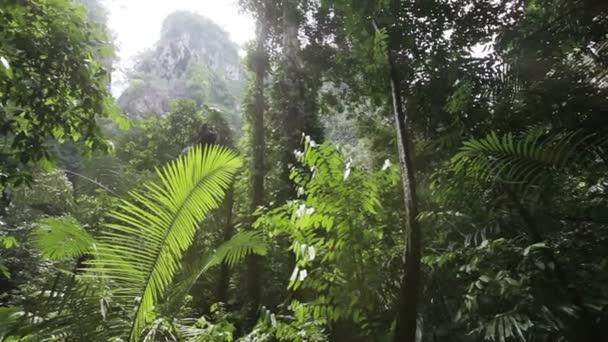 im tropischen Dschungel