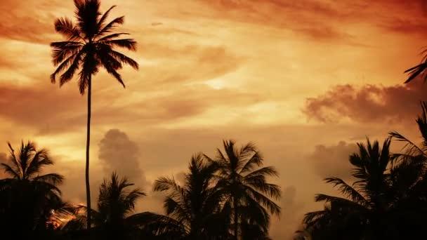 1920 x 1080 video - tropické nebe s palm stromy silueta