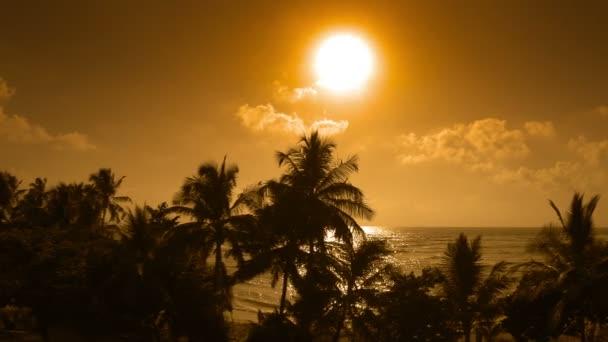 Video 1920 x 1080 - kokosové stromy siluety na pozadí tropického oceánu večer
