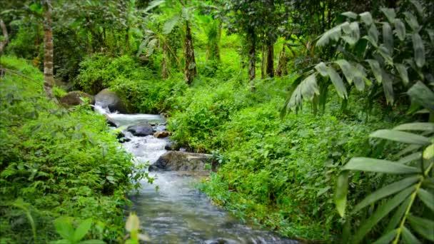 1080p video se zvukem - stream v tropickém lese po dešti