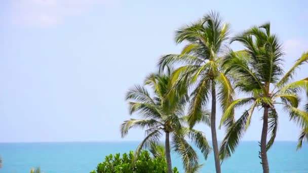 Video 1920x1080 - Group of palm trees sways in the breeze against a tropical ocean