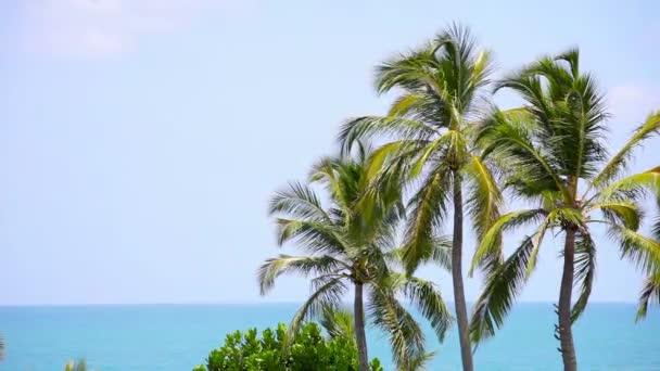 Video 1920 x 1080 - skupina palm houpe stromy ve větru proti tropický oceán