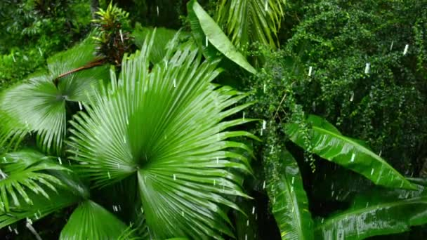 Video 1920x1080p - tropischer Regen im Wald