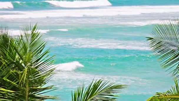 Video 1920 x 1080 - drsné moře a palmy listy