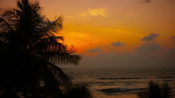 videa 1080p - tropické pobřeží při západu slunce. palem vlnící se ve větru
