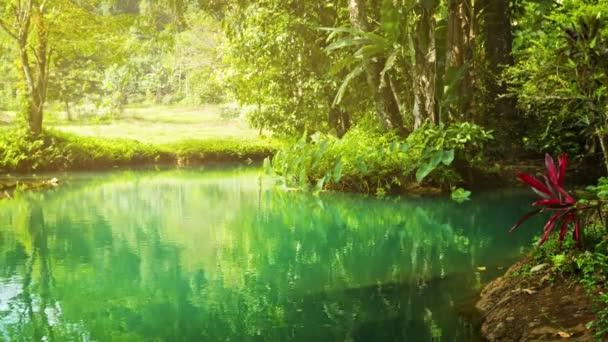 Video 1920 x 1080 - pláž na malé řece v pralese