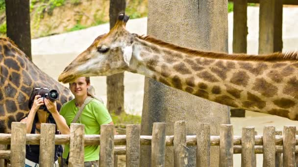 CHIANG MAY, THAILAND - 02 DEC 2013: Tourists take photos of giraffe in Chiang May Giant Panda Zoo