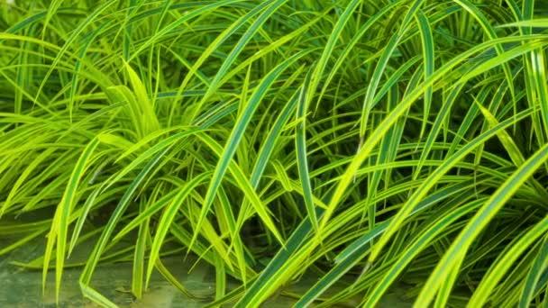 Video 1920x1080 - decorative vegetation