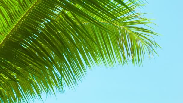 Video 1920x1080 - A light breeze rustles the palm fronds on sky background. Thailand