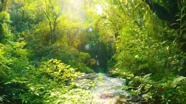Video 1920 x 1080 - creek přední části vodopádu v pralese