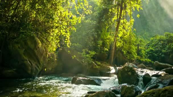 Video 1920x1080 - Creek flowing between rocks in the rainforest