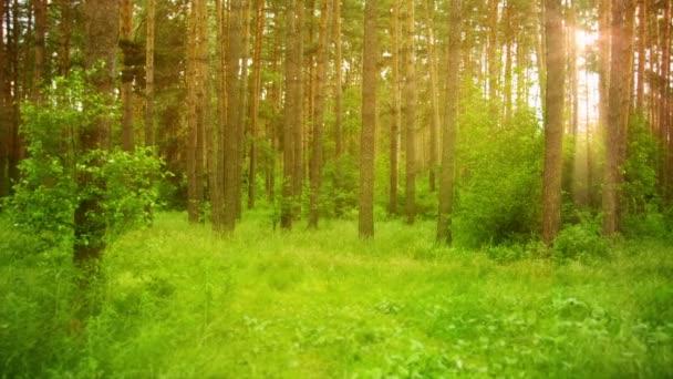 videa 1080p - krásné ráno scénu v zeleném lese s paprsky slunce
