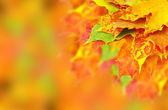 Fotografie podzimní listí