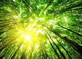 Fényképek erdő