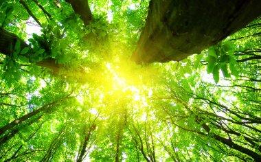 "Картина, постер, плакат, фотообои ""зеленый лес цветы природа программа"", артикул 38196623"