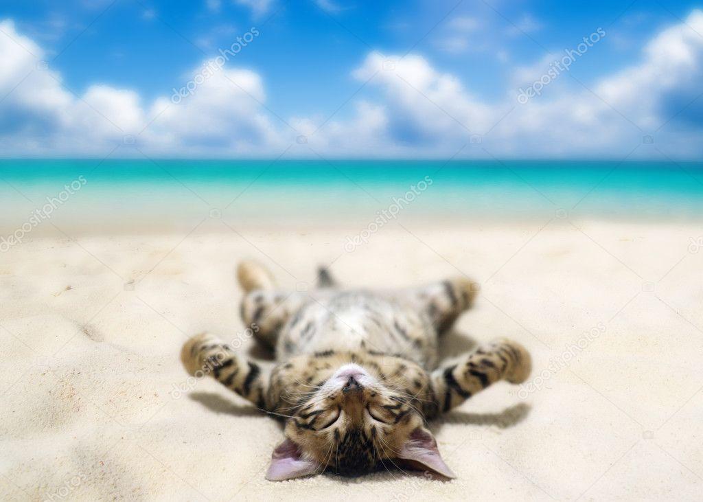 cat on beach