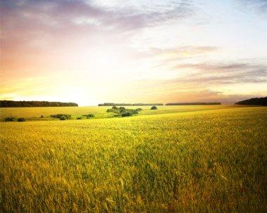 Beautifully summer landscape