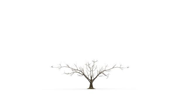 strom roste aktivita