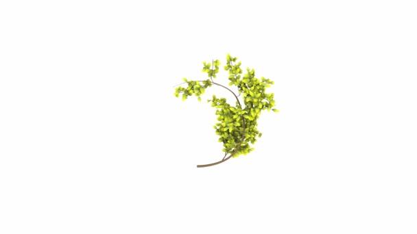 TimeLapse spirál növekvő növény