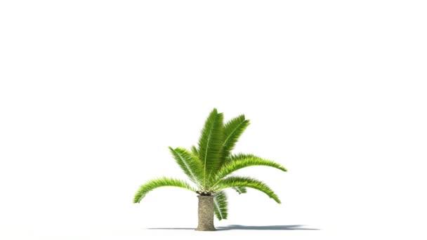 pálmafa nő timelapse tevékenység