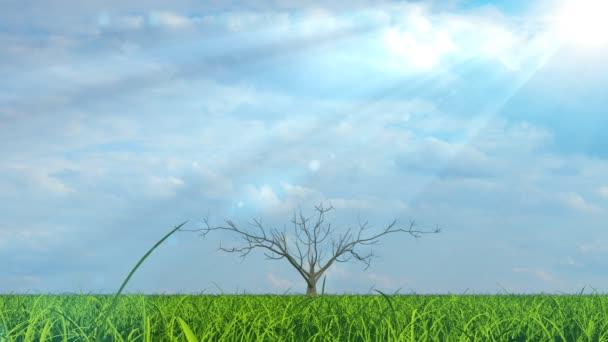 Aktivität des Baumwachstums