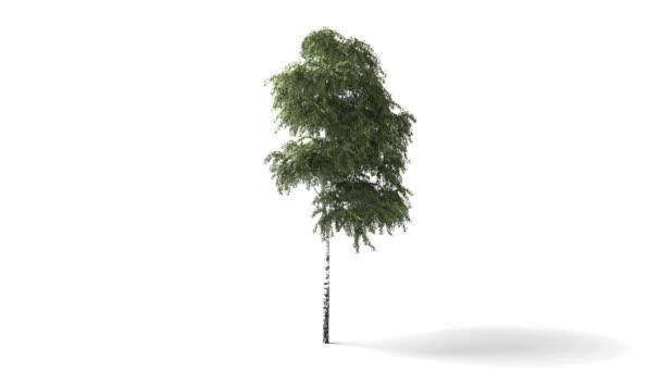 Isolated tree wind