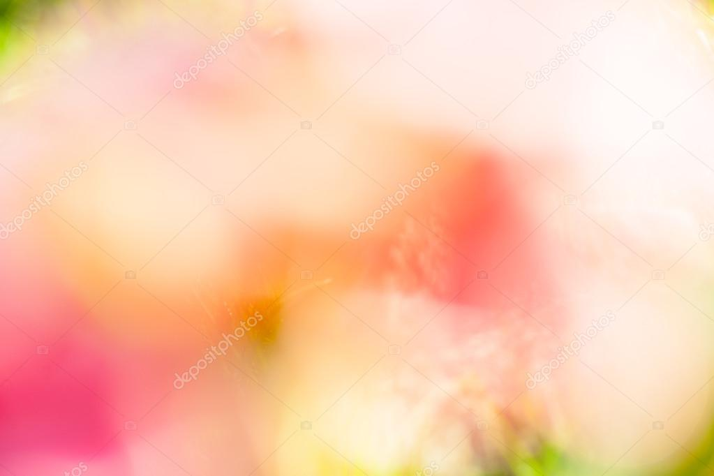 Purple, green, blue and pink pastel colorful background. bokeh blurred lights background