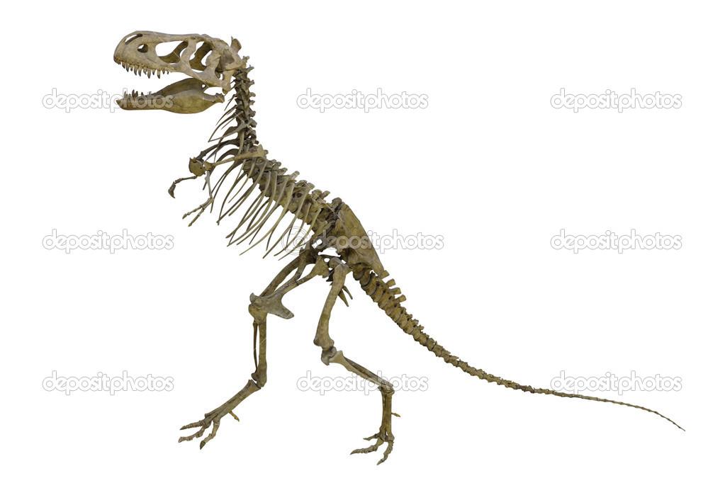 esqueleto del dinosaurio — Foto de stock © uatp12 #36467773
