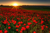 Fotografie Sunset over field with Red poppies