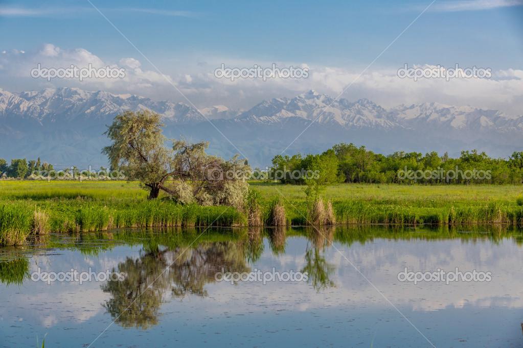 Фотообои Landscape with a pond