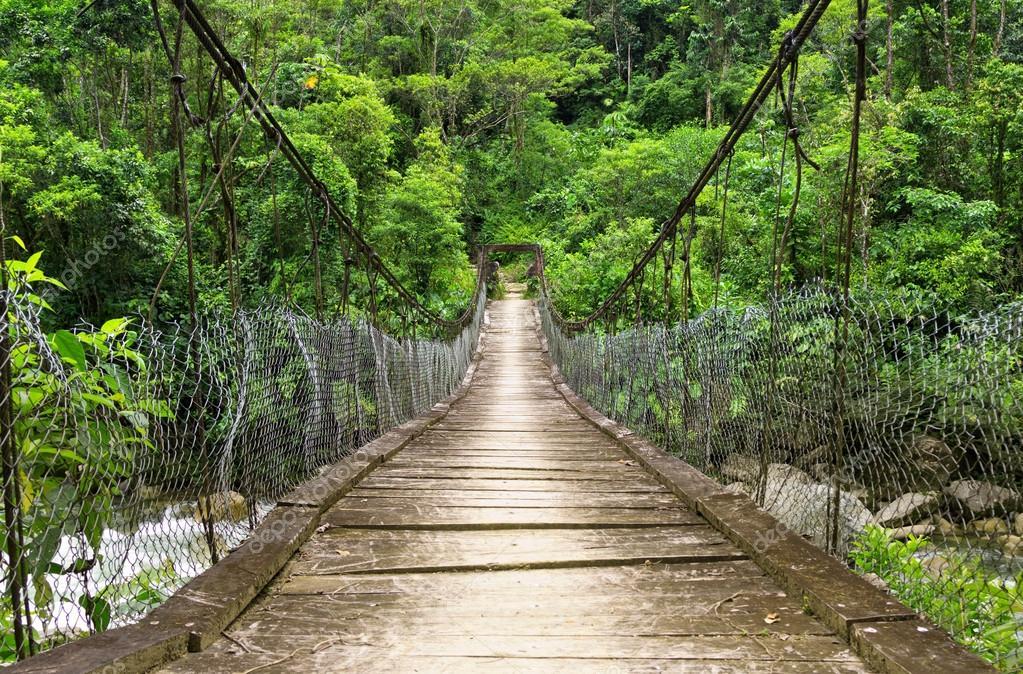 the suspension foot bridge in the jungle of ecuador
