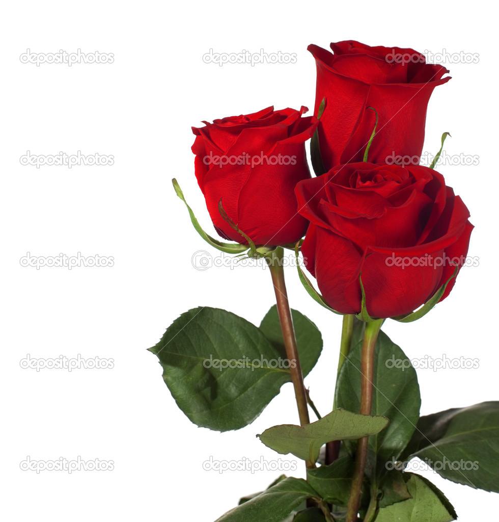 Tres Rosas Rojas Oscuras Fotos De Stock Antonel 41307513