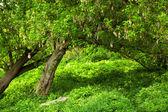 prato di primavera con grande albero con foglie verdi fresche