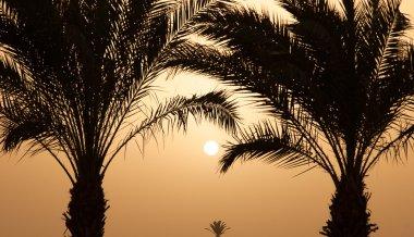 Sunset Palms near the sea coast