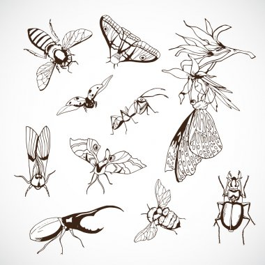 Insect Set, hand Drawn vintage illustrations with butterflies stock vector