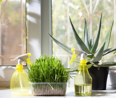 Two sprayers and different home plants in the pot on window-sill