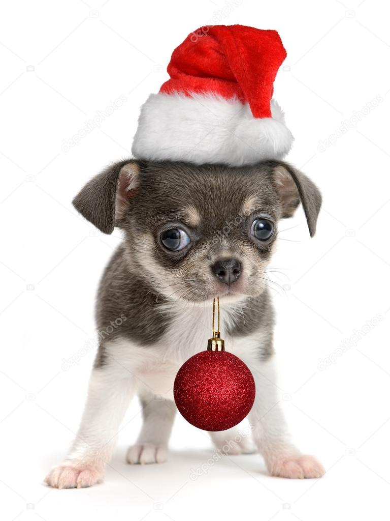 ᐈ Puppies Christmas Stock Pictures Royalty Free Puppy Christmas Photos Download On Depositphotos