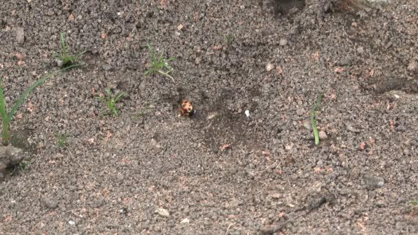 mravenci a na něm