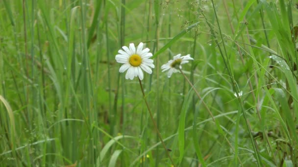 Meadow after a rain.