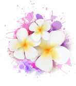 Fotografie Abstract background with plumeria flowers