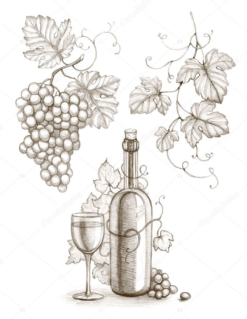 Pencil Drawing Of Wine Bottle And Grape Stock Photo