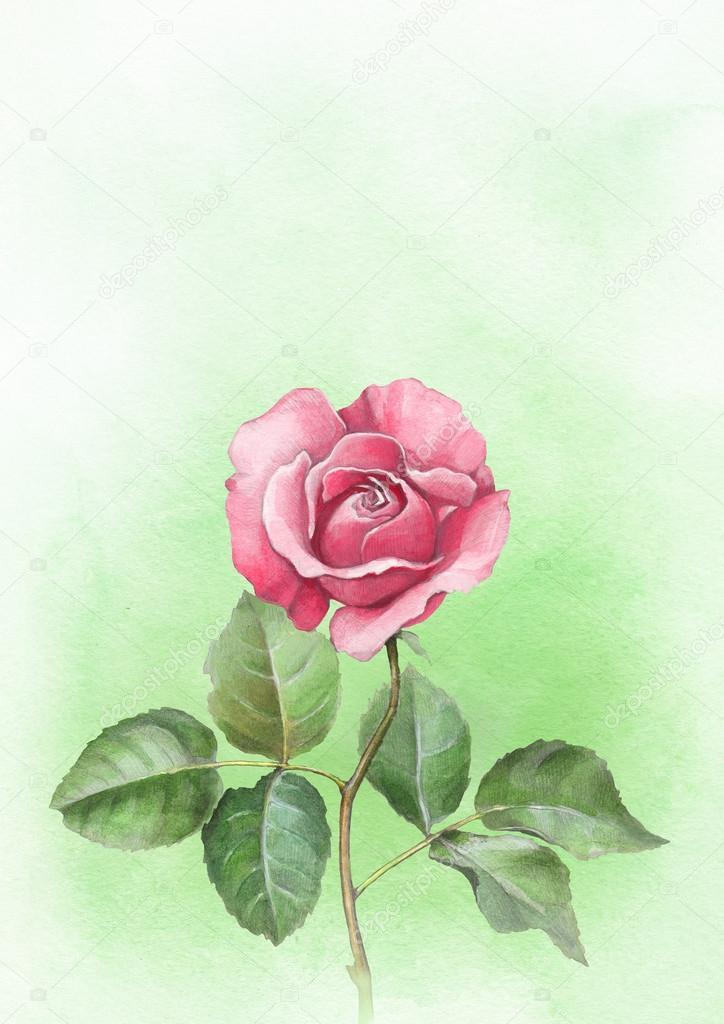 Dibujo Acuarela De Color De Rosa Perfecto Para Coche De