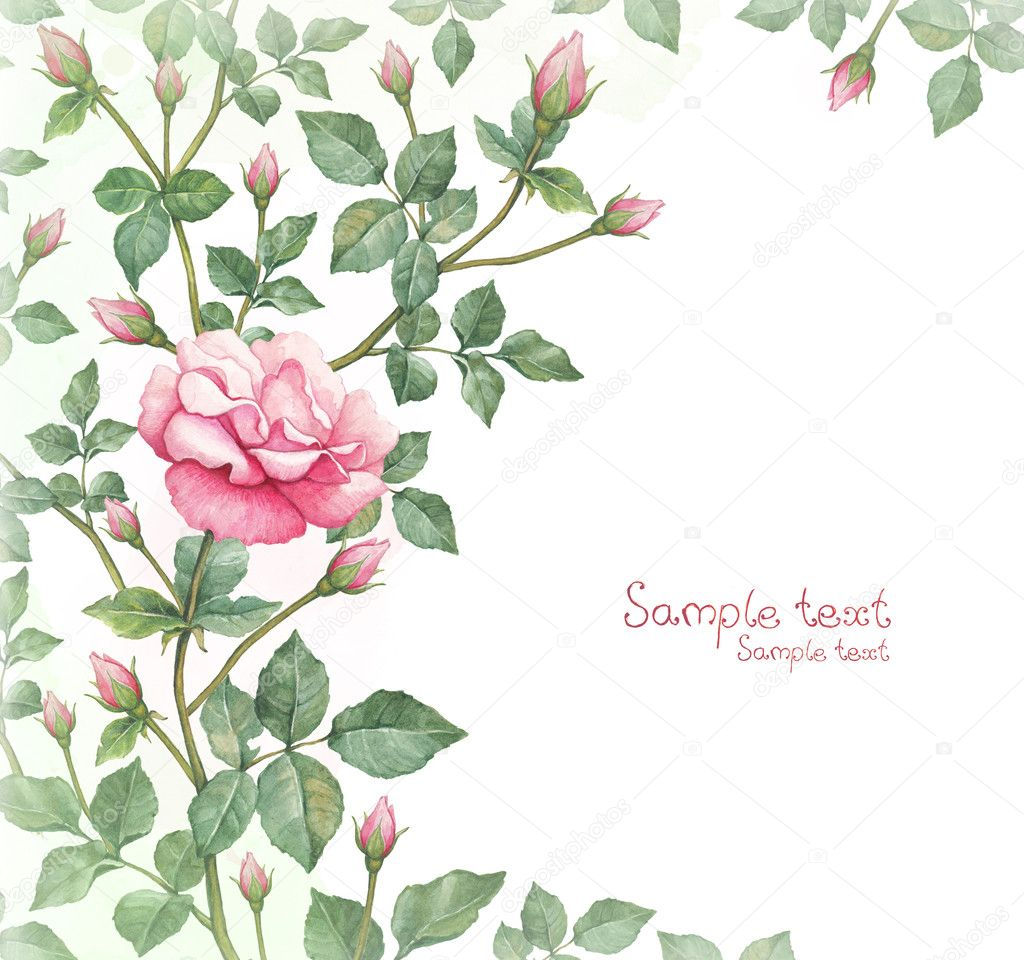 Watercolor illustration of rose flower. Perfect for greeting card