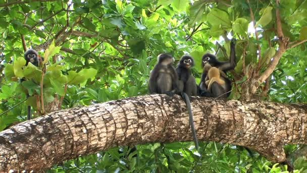 Monkeys in tropical rainforest