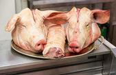 Fotografie dvě prasata hlavy na zásobník v řeznictví
