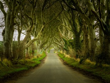 Dark Hedges road through old trees