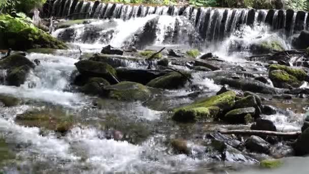 divoká řeka s peřejemi v lese